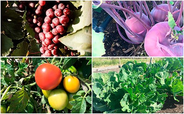 Farm & Sustainability
